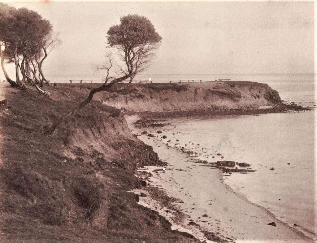 Red Bluff Brighton 1880 -1900 remnant Coast Teatree Source: SLVIC