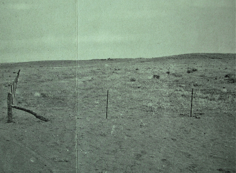 Newly fenced 1950-51 regeneration area displaying initial re-vegetation Source: Zinc Corporation 1951