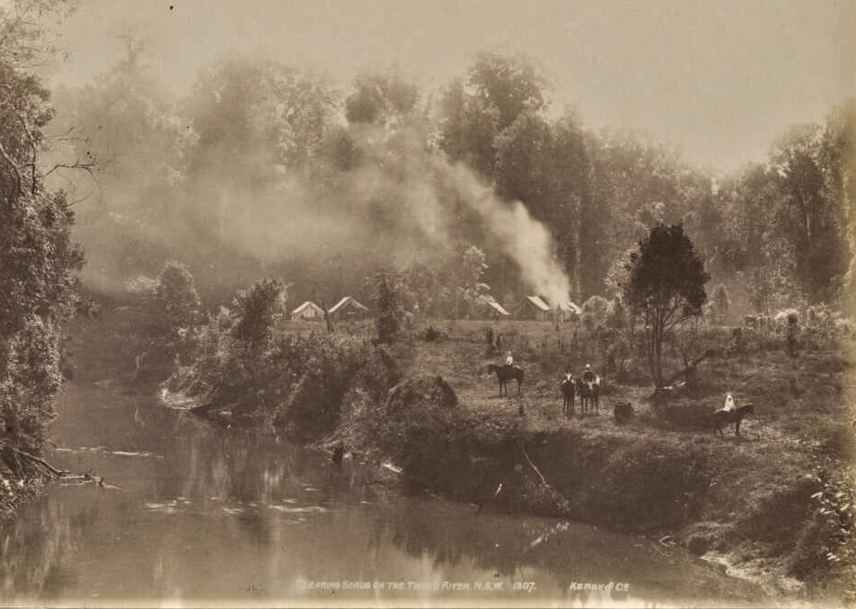 Clearing scrub on the Tweed River 1907 Source: Kerry and Co National Library of Australia