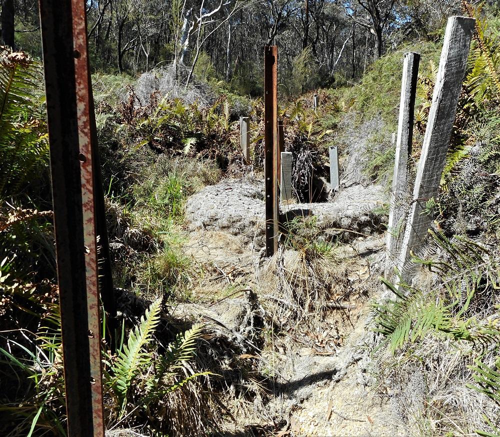 Successful swamp restoration by Roger Good, Blue Mountains NSW, undertaken ca.2010 Source: P Ardill 2019
