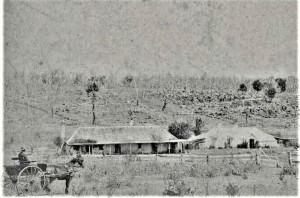 Four homestead buildings in recently ringbarked and thistle infested land New South Wales Source: RM Withycombe NLA