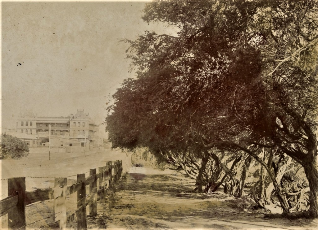 Sandringham Beach Road Tea-tree seedlings base of fence 1900 - 1910 Source: Stout and Griffith SLVic