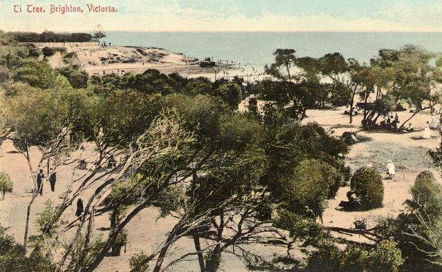 Ti Tree Brighton 1911 degraded zone Source: Bayside Library Service Brighton