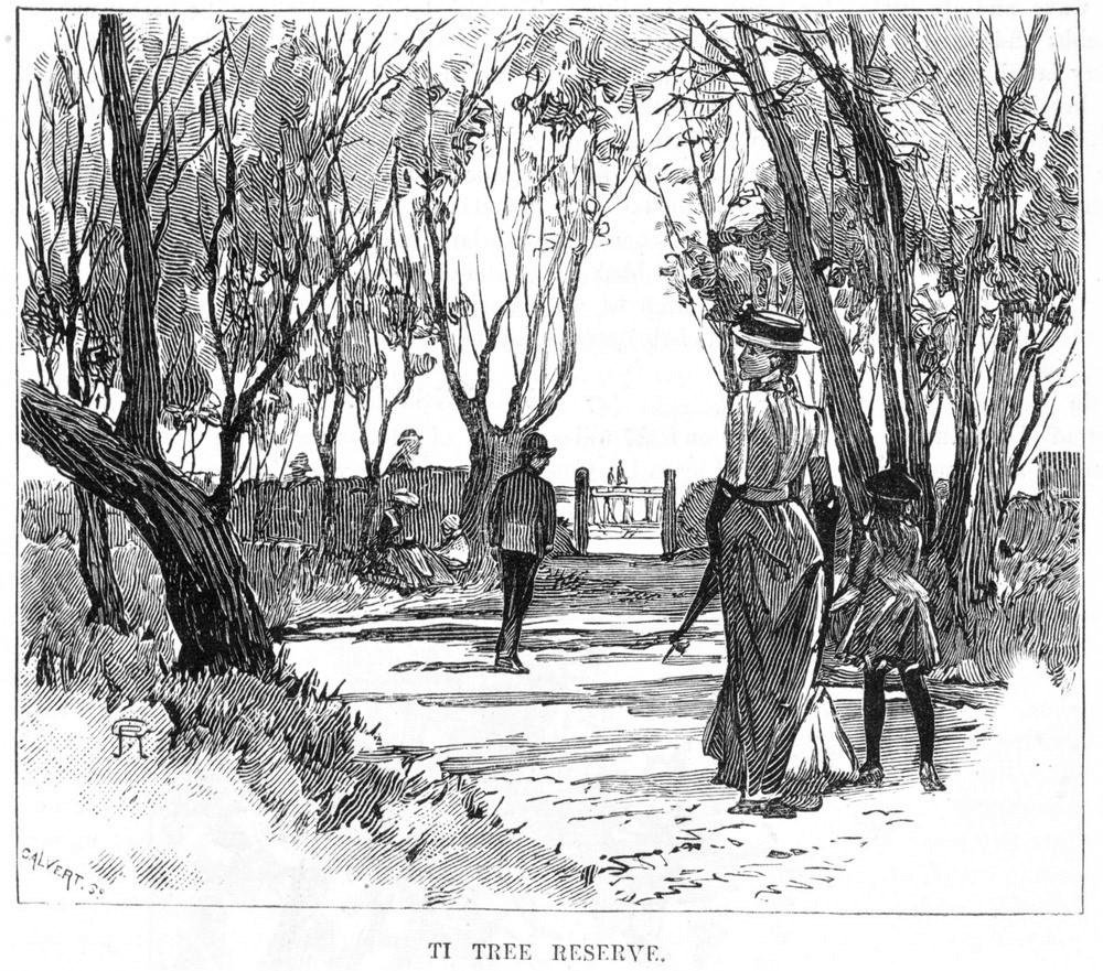 'Ti Tree reserve' 1886 Source: S Calvert SLVic