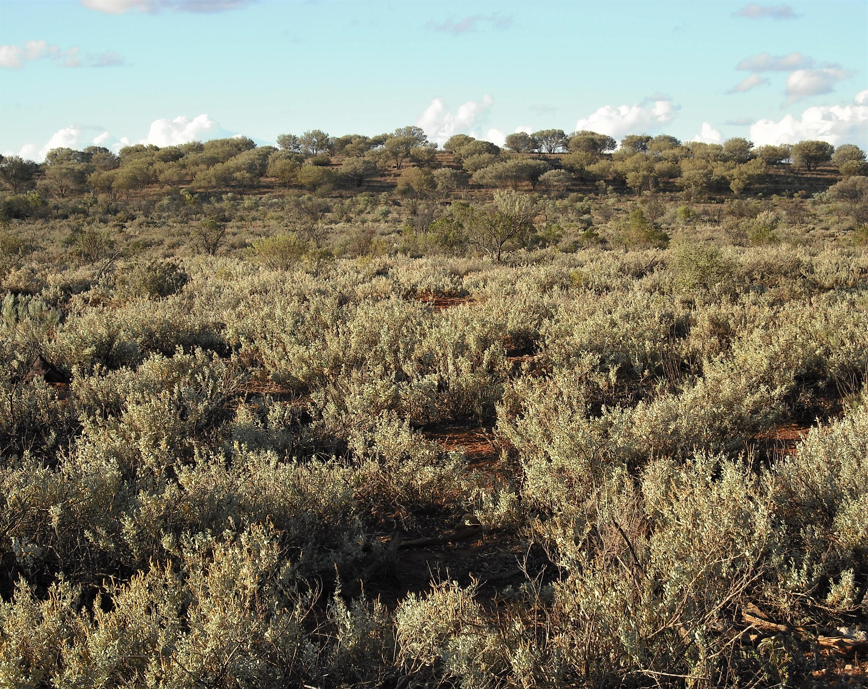 1950-51 regeneration reserve, Broken Hill regeneration area, with mulga, saltbush Source: P Ardill 2017